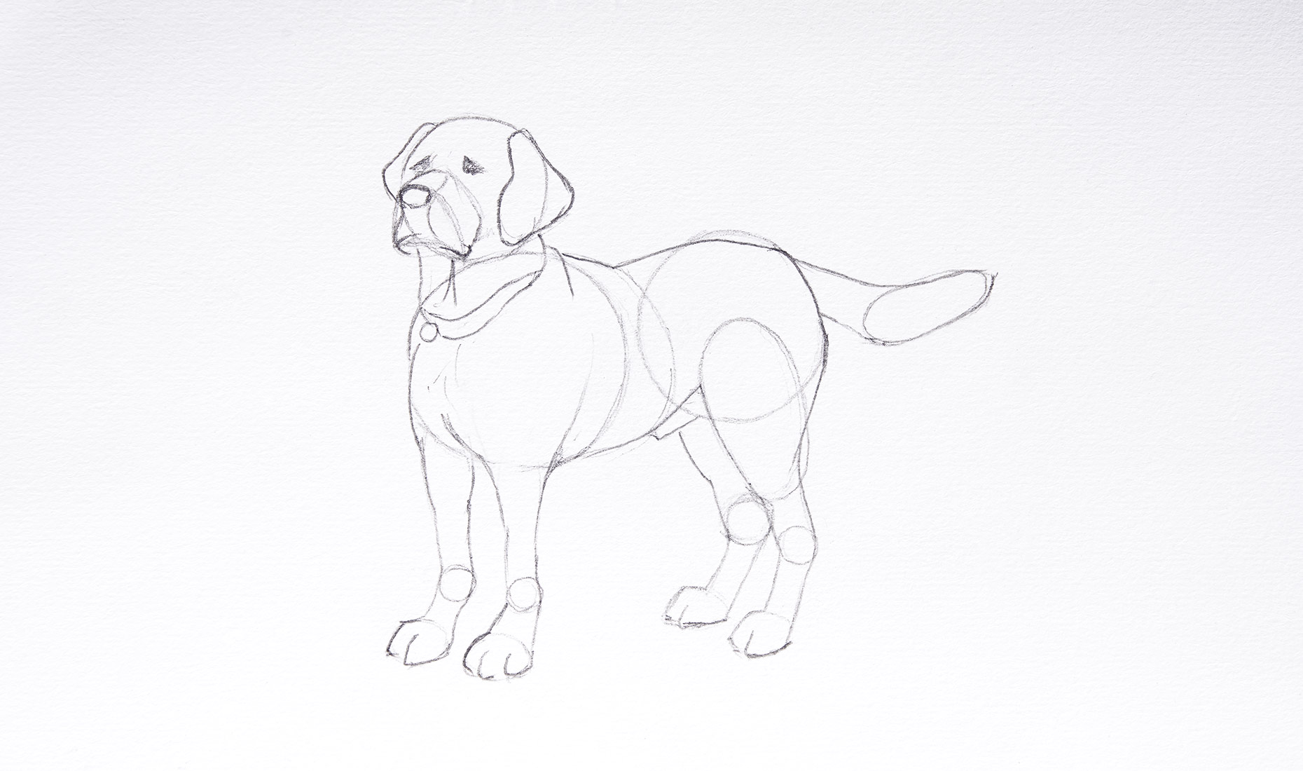 How to draw a dog easy - Step 3